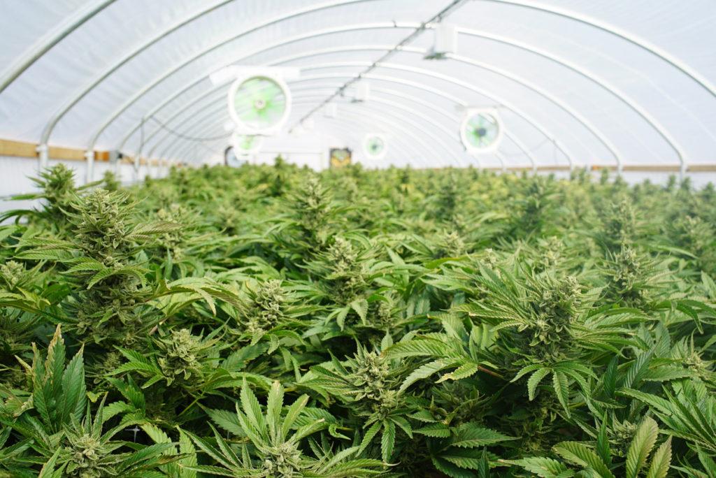 Online Sales of Marijuana Products